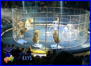 Первый поход в цирк с ребенком