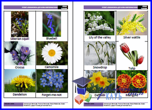 spring_flowers_cards