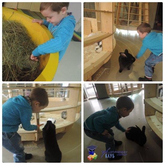 Контактный зоопарк, кролик