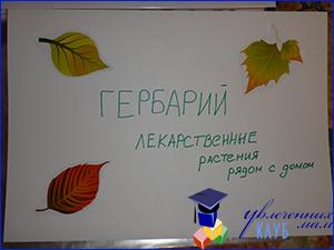 Гербарий_3