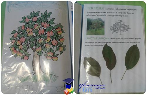 Плодовый сад_1