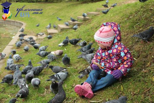 """Тематическая прогулка """"Осенний лес"""": кормим птиц"""