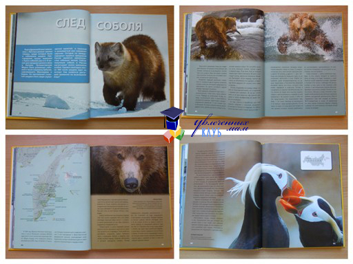 Энциклопедия дикие животные России