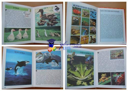 природные зоны из энциклопедии для детей
