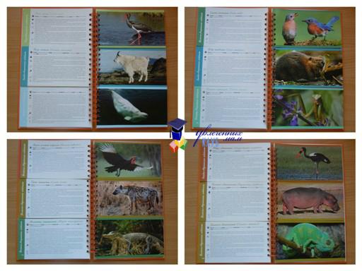 Энциклопедия: животные мира 1