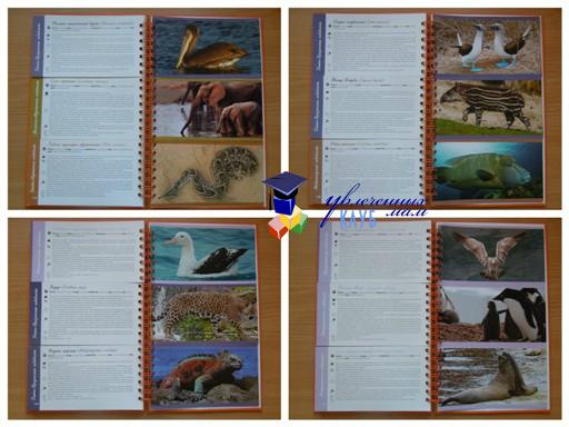 Энциклопедия животные мира 2