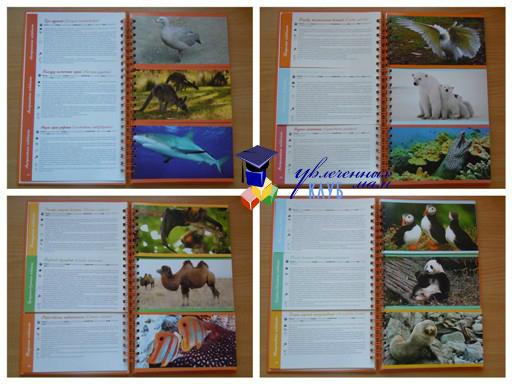 Энциклопедия: животные мира
