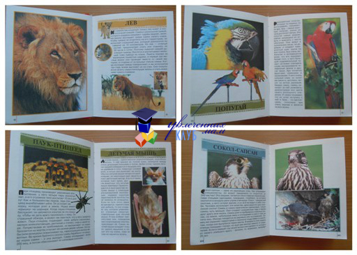 животные из энциклопедии для детей