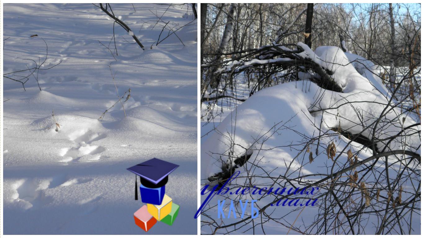 Прогулка В ожидании весны - Берлога