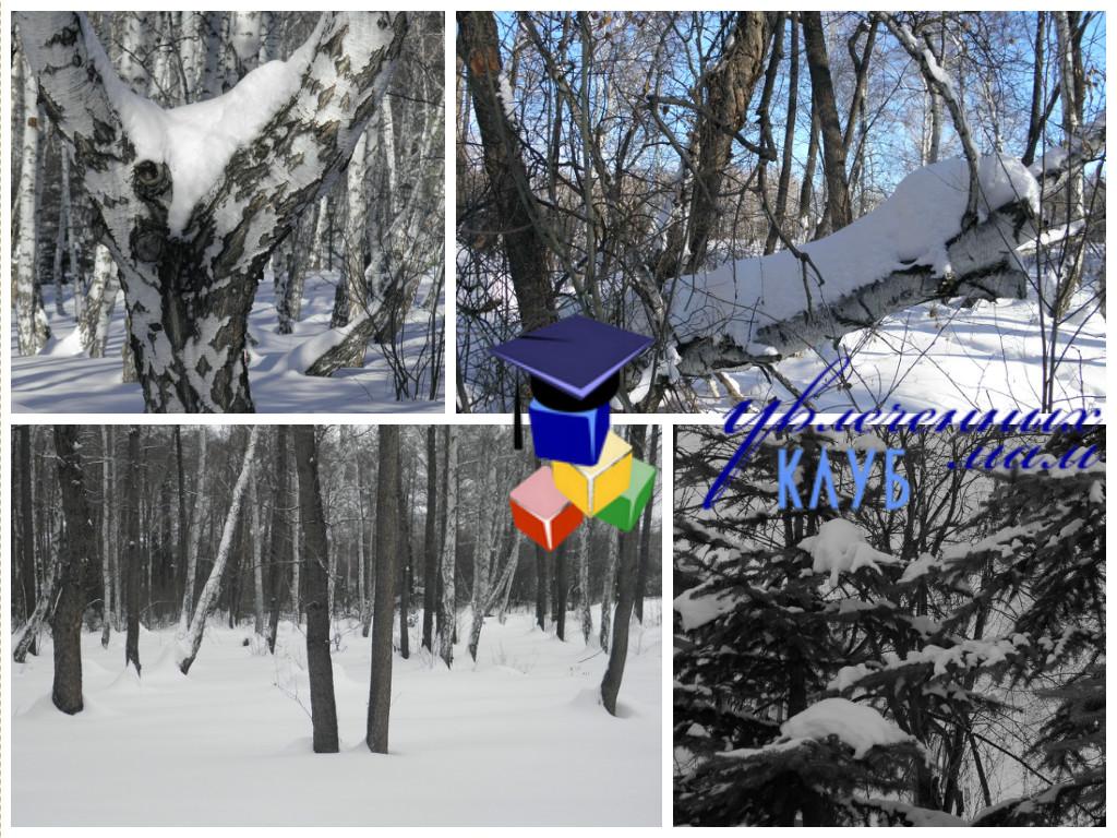 Прогулка В ожидании весны - В лесу