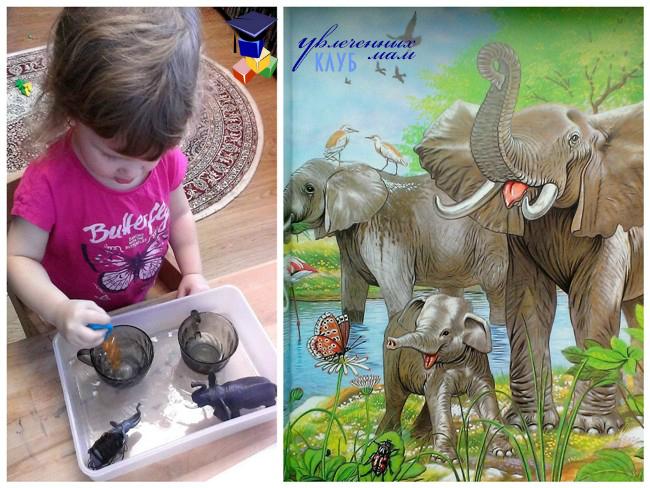 Встреча со слоном