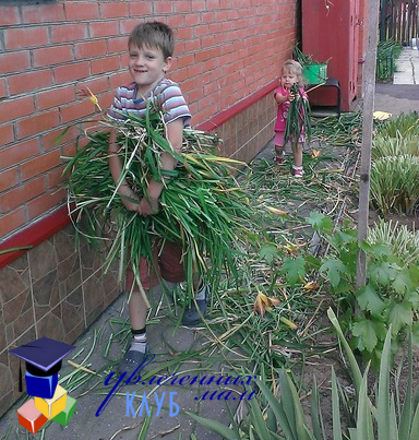 Помощь на огороде