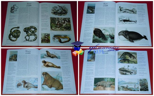 Животные2