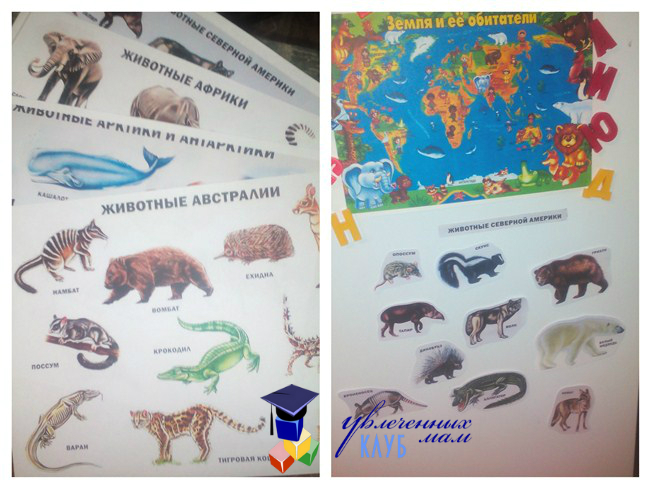 Магнитные животные на карте