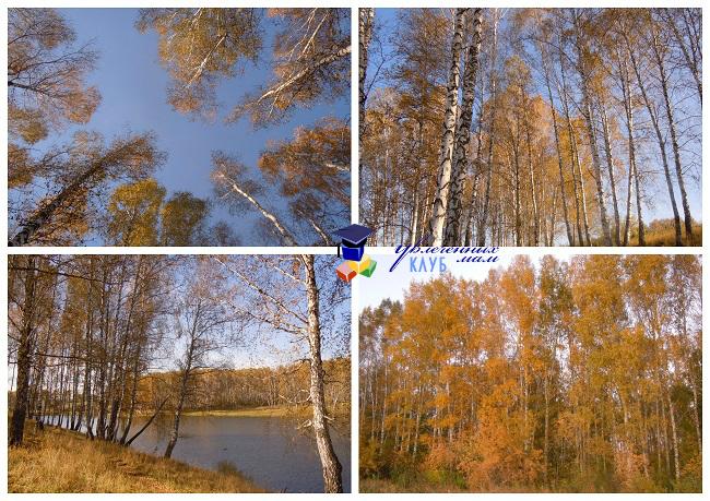 Лиственный лес2