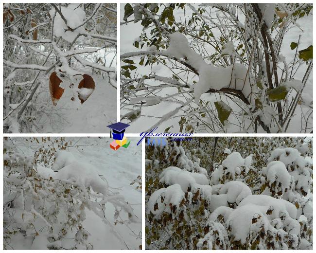 Снежные существа2