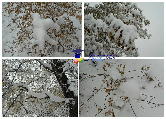 Снежные существа3