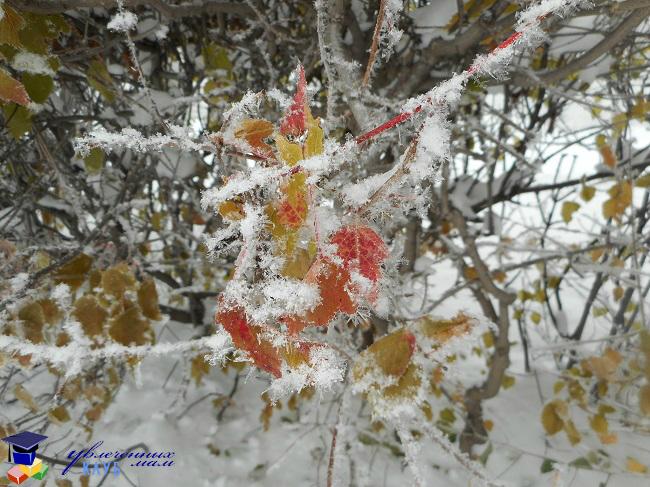 Ледяные листья