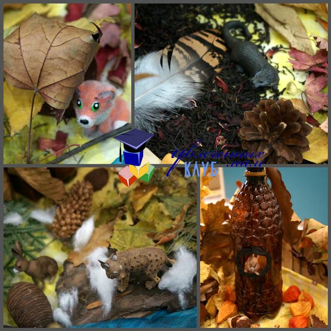 Животные в сенсорной коробке