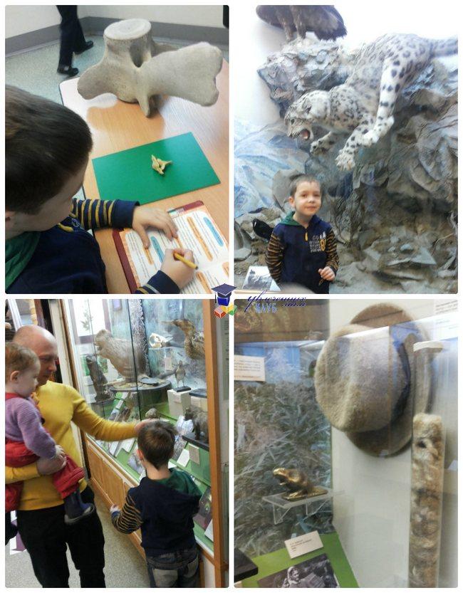 биологический музей 2