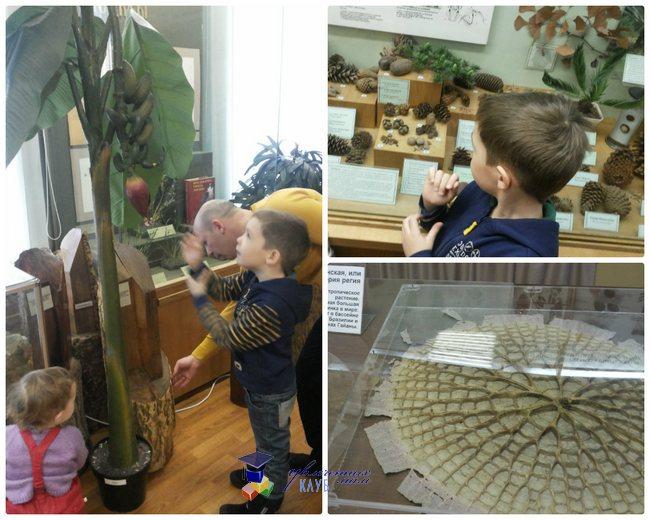 биологический музей 4