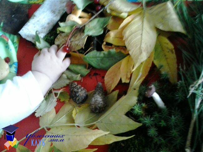 Игры с листопадничком