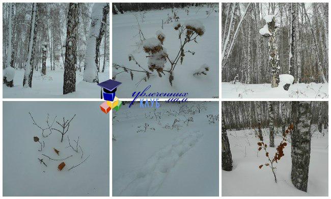 """Прогулка """"Зимний лес"""""""